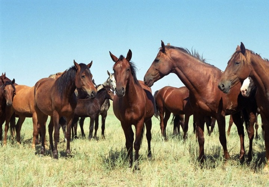 Лошади.jpeg