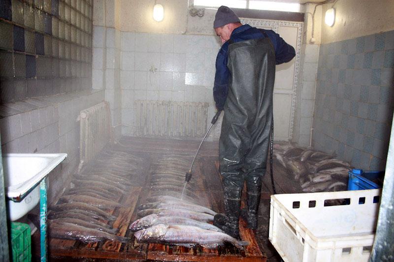 Рыбоперерабатывающий завод.jpg