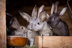 Construction of the third stage of an industrial complex for rabbit meat production